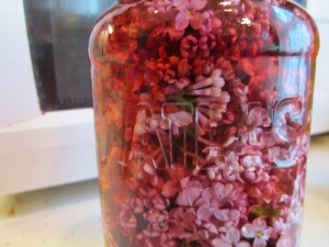 Lilacs in vinegar