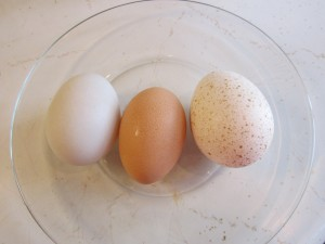 Left to right- duck egg, chicken egg and turkey egg