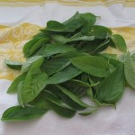 Place fresh basil on a towel and fold towel over the herbs